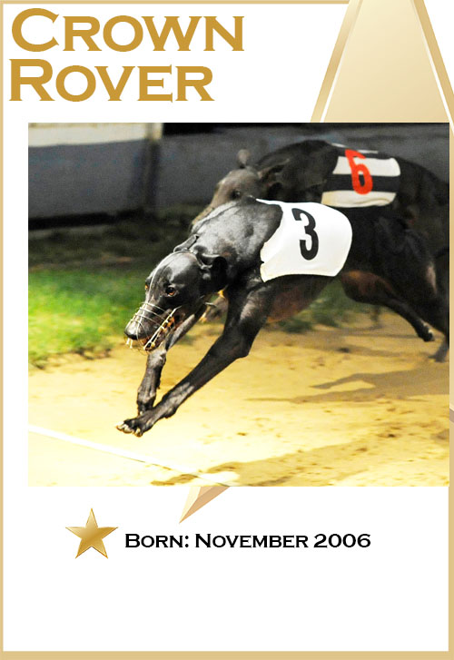 DROOPYS BUICK Gold Cup winner.Monmore 17th August 2017.Photo: © Steve Nash