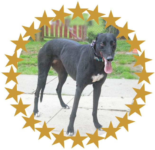 Droopys Flo